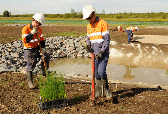 revegetation specialists hunter valley